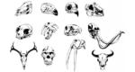 skull-set-preview-2