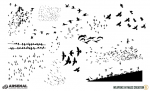 WMC-Fest-Flock-of-Birds