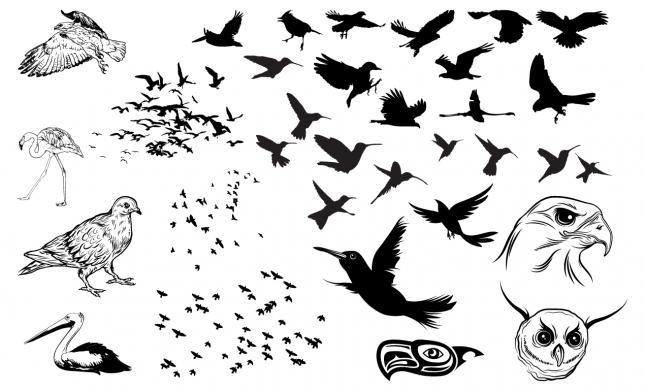 Birds Vector Pack for Adobe Illustrator