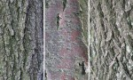 Adobe Photoshop Texture  Texture Pack 02 Bark Previews 03