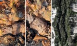 Adobe Photoshop Texture  Texture Pack 02 Bark Previews 05