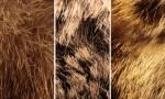 Adobe Photoshop Texture  Texture Pack 05 Fur Previews 01