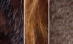 Adobe Photoshop Texture  Texture Pack 05 Fur Previews 02