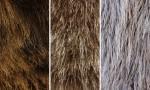 Adobe Photoshop Texture  Texture Set 05 Fur Previews 05