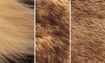 Adobe Photoshop Texture  Texture Pack 05 Fur Previews 06