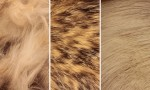 Adobe Photoshop Texture  Texture Pack 05 Fur Previews 07