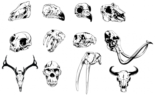 Animal Skulls Vector Pack