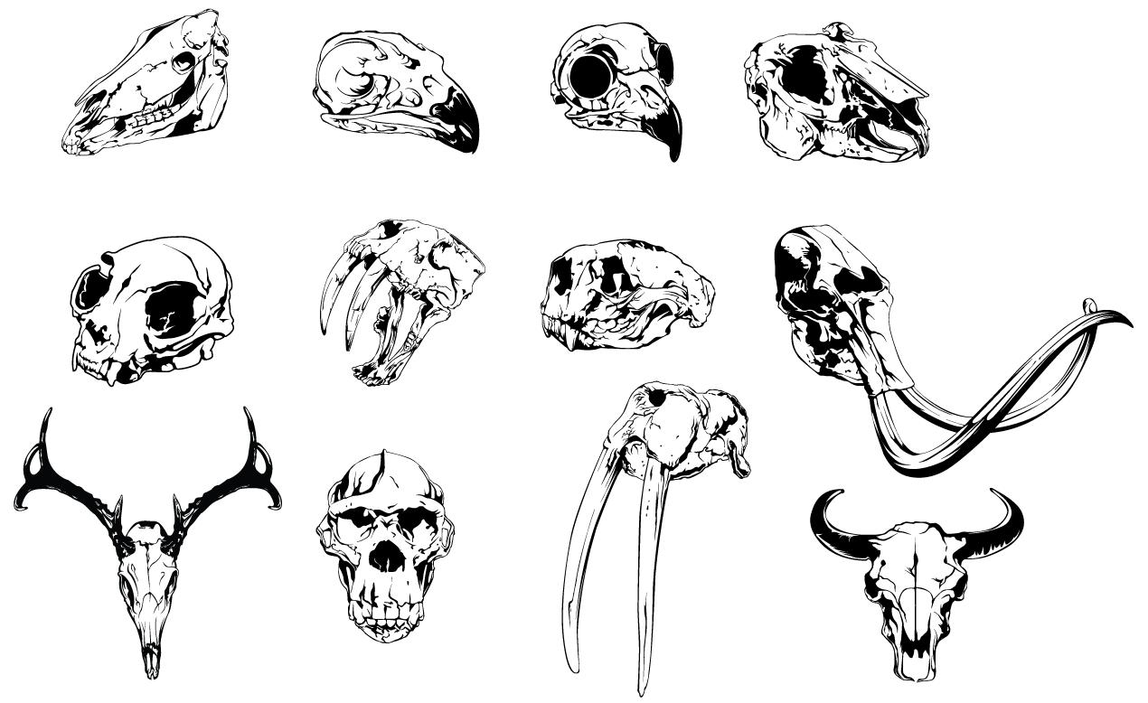 Animal skulls are how the cool kids skullify. The Adobe Illustrator ... | 1270 x 778 png 120kB