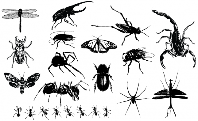 Insects Vector Pack