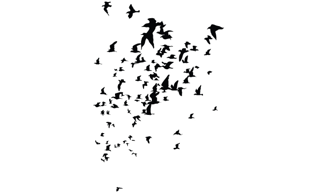 Flock of Birds Png Flock of Birds Silhouette