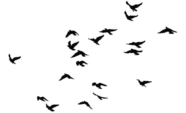 Gallery For gt Bird Flock Vector