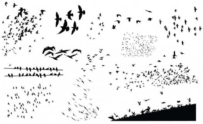 Adobe Illustrator Vector Set 05 Flockofbirds Preview All