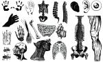 Anatomy Vector Packs