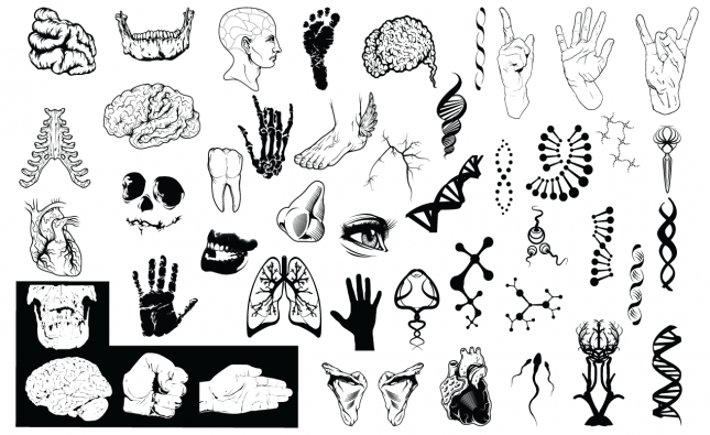 Anatomy Vector Pack for Adobe Illustrator - 2