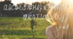 Emily Script Font 1