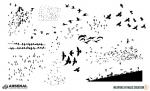 WMC-Fest-Flock-of-Birds