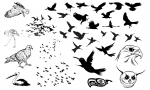 Birds Vector Pack for Adobe Illustrator