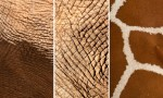 Adobe Photoshop Texture  Texture Pack 04 Skin And Fur Previews 01