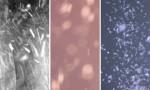 Adobe Photoshop Texture  Texture Pack 05 Dust Previews 03