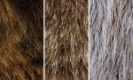 Adobe Photoshop Texture  Texture Set 05 Fur Previews 05
