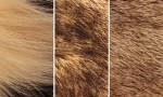 Adobe Photoshop Texture  Texture Pack 05 Fur Previews 06