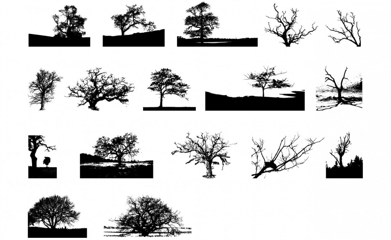 Adobe Illustrator Tree Vector Pack