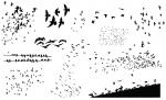 Go Media's Birds Vector Pack for Adobe Illustrator