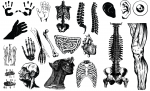Anatomy Vector Packs