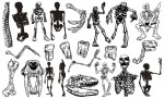 Skeletons Vector Pack