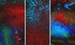 Adobe Photoshop Texture Mk Liquid Psychedelic4